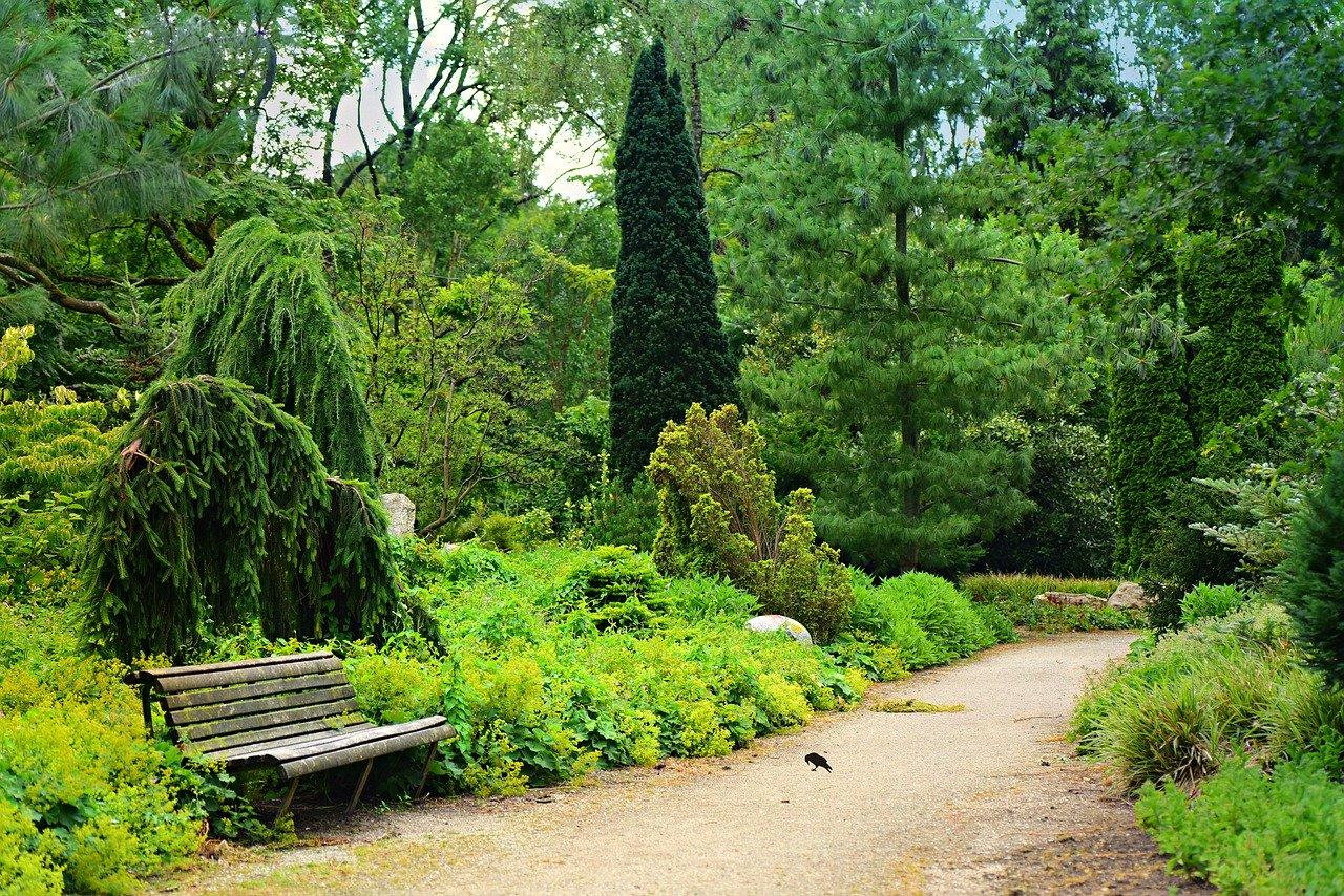 park, path, bench